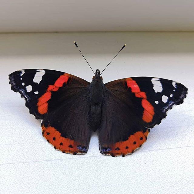 И бабочка