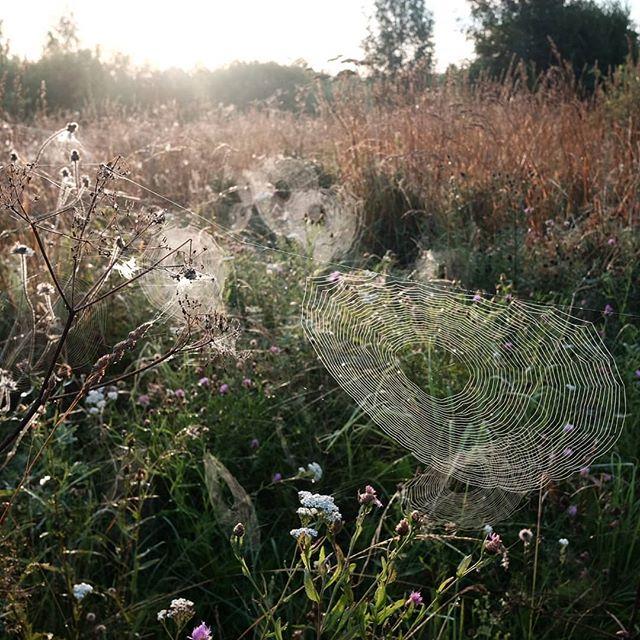 Вся трава в кругах паутины