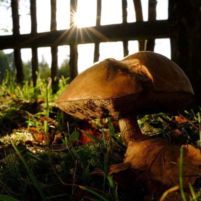 Два обабка #грибы #pskov #псков