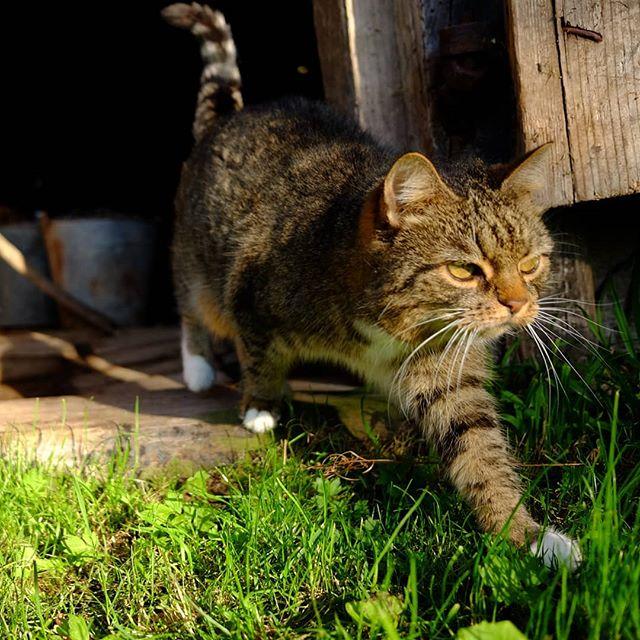 Мурка #кошка #cat #cats