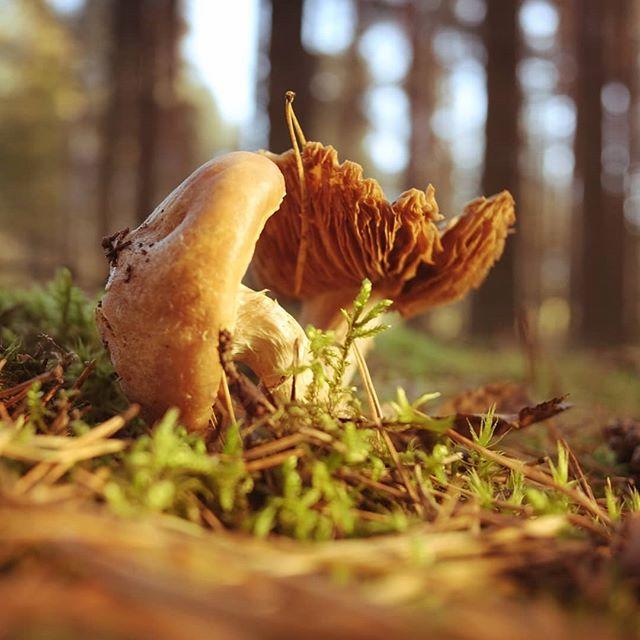 Грибочки #псков #грибы #mushrooms