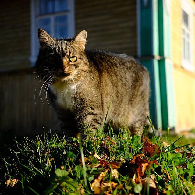 Последняя прогулка этого сезона. #котики #кошка #кот #мурка #cat #cats
