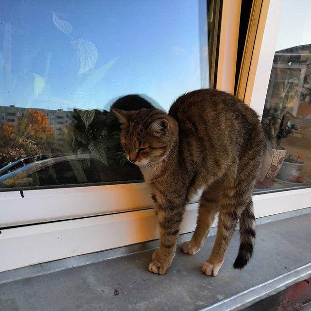 Кот поприветствовал потягиванием #кот #котики #cats #pskov @bodyfitnessstyle