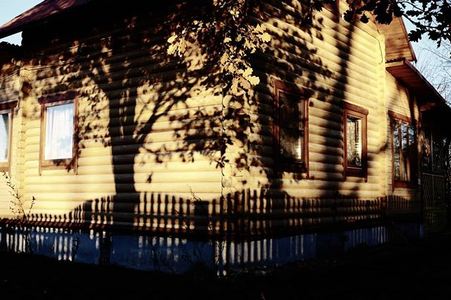 Оттенки золотого. Стены и тени. #нинково #стены #тени #оттенкизолотого #осень #дуб #shadows #walls #autumn #oak