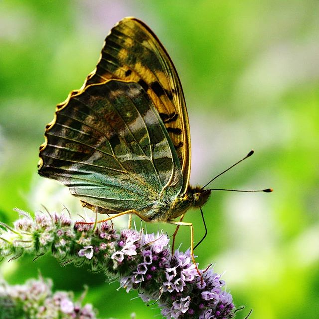 #бабочки #макро #природа #крупнымпланом #macro #nature #closeup #butterfly