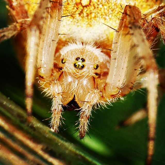 #spider #macro #closeup #nature #паук #макро #природа #крупнымпланом