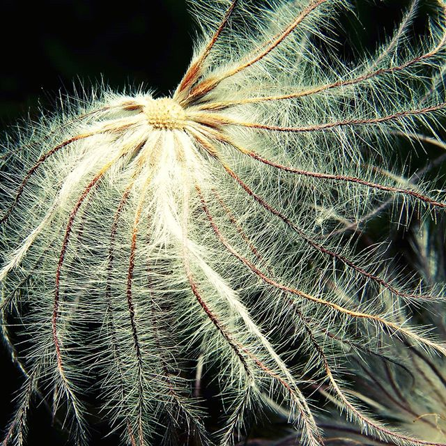 #макро #природа #крупнымпланом #macro #closeups #nature